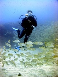 for dive trips in Las Palmas, a short ride will take you to some excellent diving in the Arinaga marine Reserve
