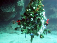 Gran Canaria Diving at Christmas