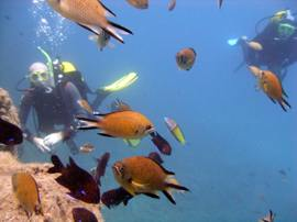 The El Cabron Marine Reserve is the best place to learn to dive in Gran Canaria