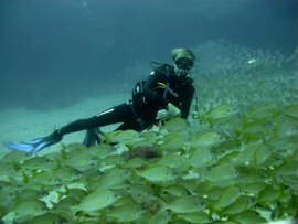 By the end of winter in Gran Canaria, gloves and hood are recommended in the deeper waters of the marine reserve