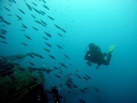 Diving in Las Palmas on the wreck of the Arona, Gran Canaria