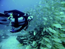 When you have perfect buoyancy control you can float alongside shoals of fish and they are not scared.