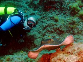 Diving Gran Canaria - Round Ray