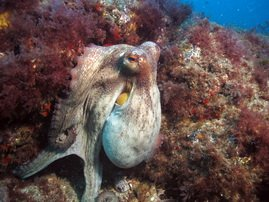Gran Canaria -PADI training at 5-star dive centre