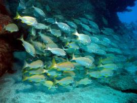 Gran Canaria -divers in the warm subtropical waters of the El Cabrón marine reserve