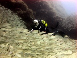 Gran canaria divers find there's a surprise everywhere