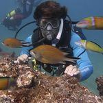 Scuba Diving Gran Canaria -Fish and Marine life on Reef