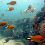 Fish on Reef underwater in Gran Canaria