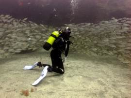 Gran Canaria - Dive into the shoals in warm subtropical waters of the El Cabrón marine reserve