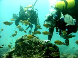 Dive into shoals of fish in Gran Canaria