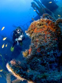 The Arona is a spectacular wreck, covered in marine life