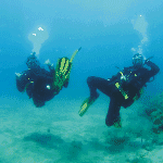 One-day courses for beginners and snorkel excursion