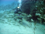 Dive gran canaria - good conditions