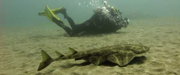 diving with sharks gran canaria