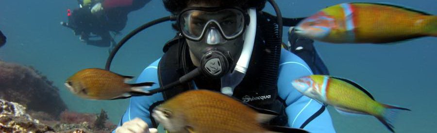 gran canaria diving with shoals of fish