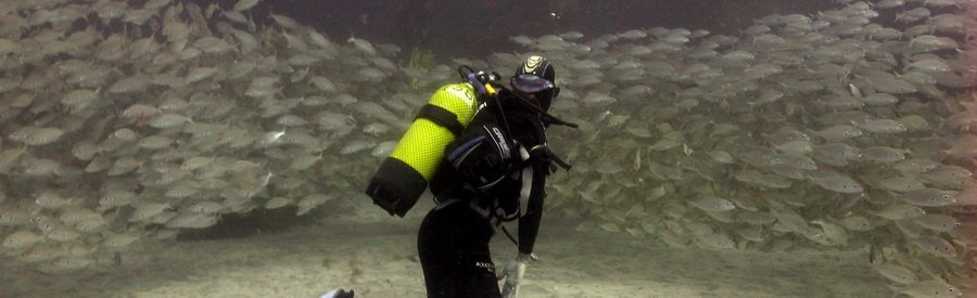 scuba diving with a shoal of roncadors