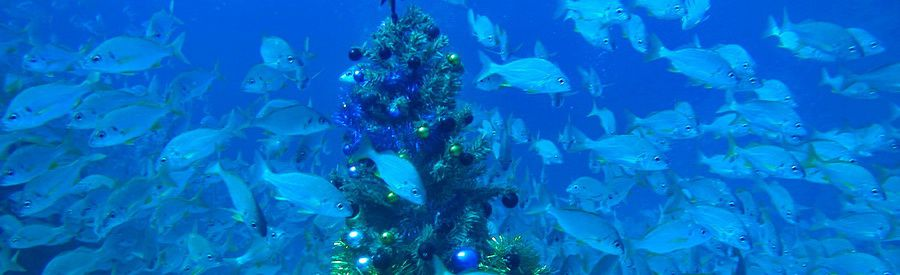 gran canaria underwater christmas tree and shoals