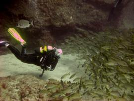 underwater conditions in the El Cabrón marine reserve are updated every day